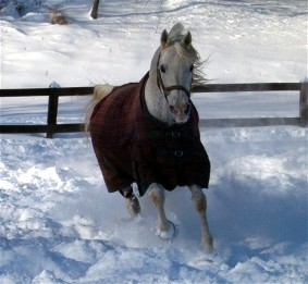 Arabian Rescue Mission's Prudent HT playing in the snow